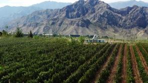china wine industry